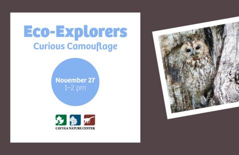 Eco-Explorers: Curious Camouflage