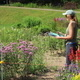 Webinar - How Native Plant Cultivars Affect Pollinators
