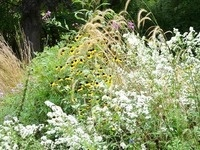Growing Native Plants from Seeds