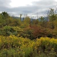 Fall Foliage Walk