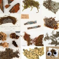 Bryophyte and Lichen Specimens