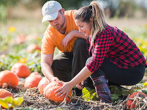 Pitt-Johnstown Program Board and The Outdoors Club present: A Sunday at Weakland Farms Corn Maze and Pumpkin Patch on October 24!