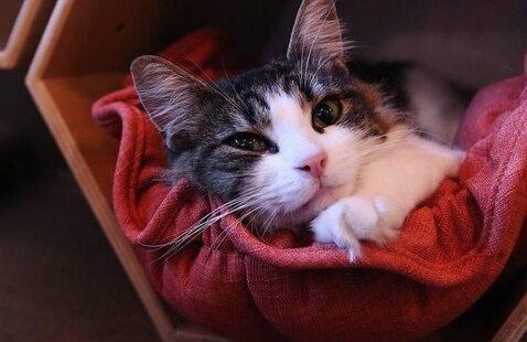 Gray Fund: Purrington's Cat Lounge Excursion