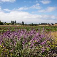 UCSC Farm