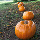 Pumpkin Harvest and Painting