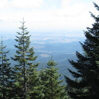 Trees & Forests of Marys Peak: The Stories They Tell