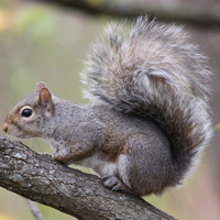 Art in the Park: Squirrels!