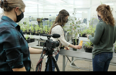 videotaping work in a plant lab