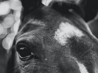 Equine Seminar Series: The Colic Workup Explained