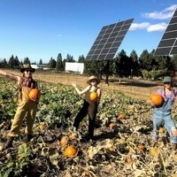 Three students with pumpkins in front of solar at the Farm at SOU