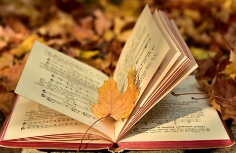 Open book laying on fall leaves