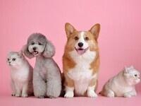 ACM-W Halloween Pet Photo Contest Fundraiser