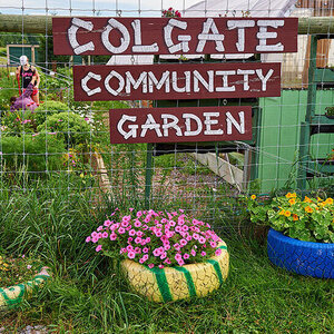 Walking Tour of the Colgate Community Garden
