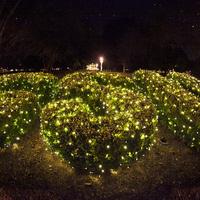 UPB: Annual Lighting of Sweetheart Circle