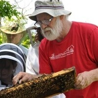 Telling the Story of Honey Bees (What's All the Buzz?)