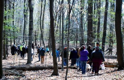 Tree Phenology Walk Series
