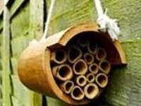 Make a Bee Hotel for Native Pollinators