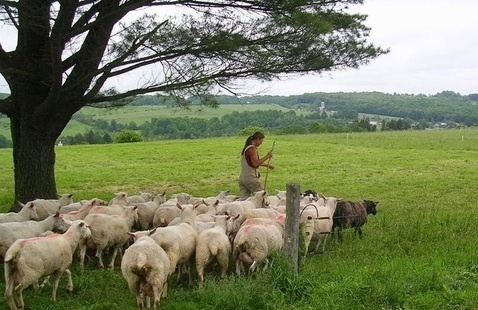Mother's Day Supper Club with Northland Sheep Dairy