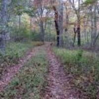 Cedar Tree Neck Sanctuary