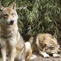 Wolf Pack Family Day at the Museum