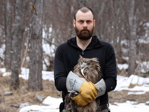 From Tigers to Owls: Endangered Species Conservation in the Russian Far East