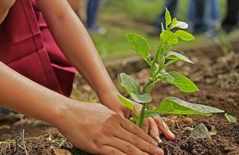 Arbor Day Tree-tastic Trek