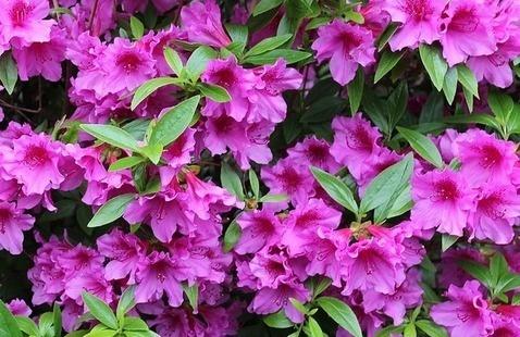 Gwinnett Master Gardener Plant Sale