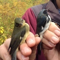Canceled: National Birding Day