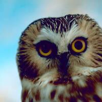 National Owl Appreciation Day