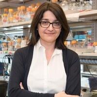 Biology Colloquium Series (Dr. Christine Mayr)