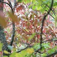 Leaf Peeping and Peak Bagging