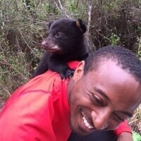 Florida Black Bear- A Conservation Success Story- So Where Do We Go From Here?