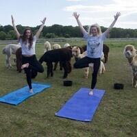 Island Alpaca Yoga
