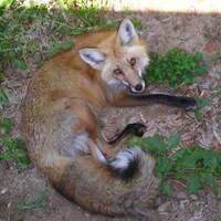 Mammals of Raccoon Creek State Park