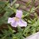Summer Wildflower Walk
