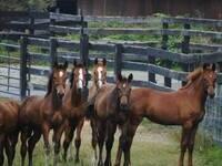 Hoof it for the Horses 5K