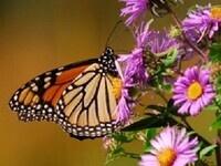 Introducing Butterflies & Dragonflies