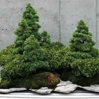 An Evening of Bonsai with Arthur Joura