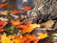 Nature Center Open House: The Science of Fall