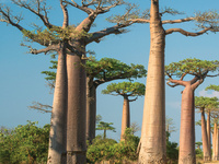 CAU Study Tour: Mauritius and Madagascar: Asia Meets Africa—Cultural History and Abundant Nature