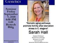 """MBG Friday Seminar with Sarah Hall """"Somatic aging pathways promote fertility after starvation stress in C. elegans"""""""