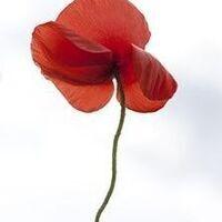 Lee Karen Stow on Poppies: Women, War, Peace