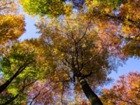 Yoga with Trees - September 30, 2018