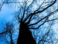 Yoga with Trees - November 11, 2018