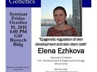 """MBG Friday Seminar with Elena Ezhkova """"Epigenetic regulation of skin  development and skin stem cells"""""""