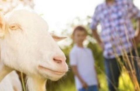 Fall Farm Adventure Day