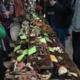 Mushroom Festival at Mt. Pisgah