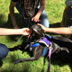 PAAWs Pet Therapy Info Session and Open House
