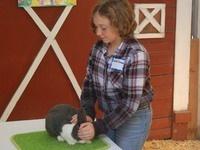 Small Animal Showmanship, 4-H