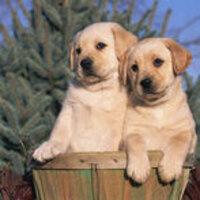 Doggies @Dunn